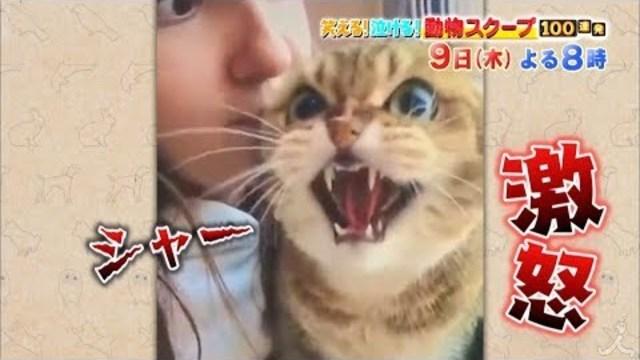 動物 100 泣ける 笑える 連発 スクープ